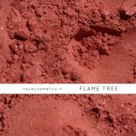 flame-tree-minenral-blush